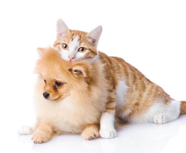 Donos de cães e gatos têm personalidades bem diferentes
