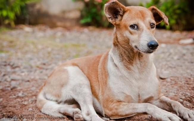 Aprenda sobre cães sociáveis e socializados