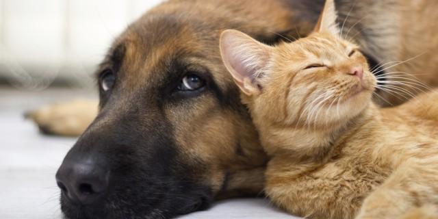 Como ajudar um animal abandonado?